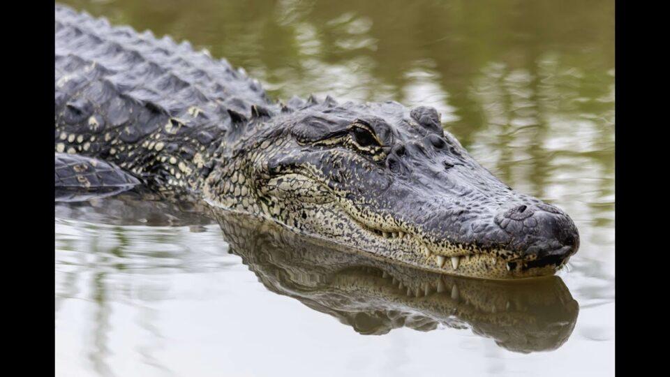 Nooner hang + Alligator and Snake talk