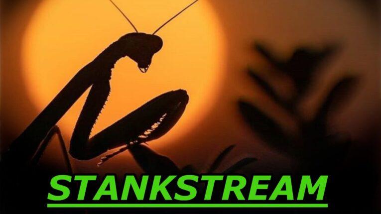 Stankstream – Late n Ghey